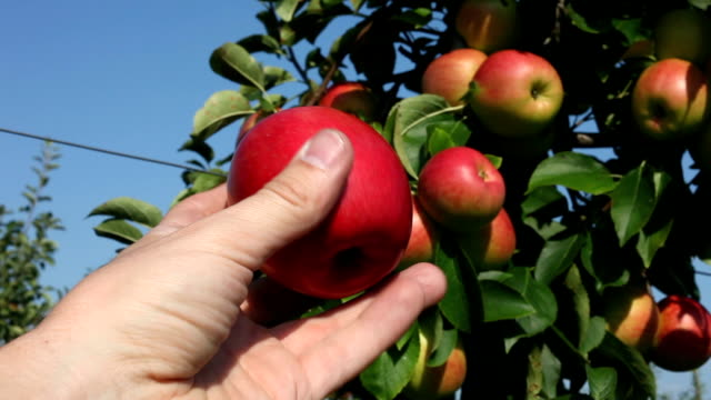 Hand showing an apple