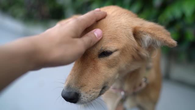 犬の頭をなでる手 - 撫でる点の映像素材/bロール