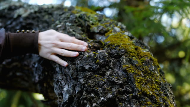 hand stroking tree trunk - tree trunk stock videos & royalty-free footage