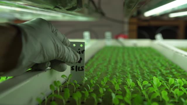 cu hand taking care of seedlings under lights - 生物学点の映像素材/bロール