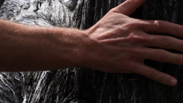 hand touches tree trunk - tree trunk stock videos & royalty-free footage