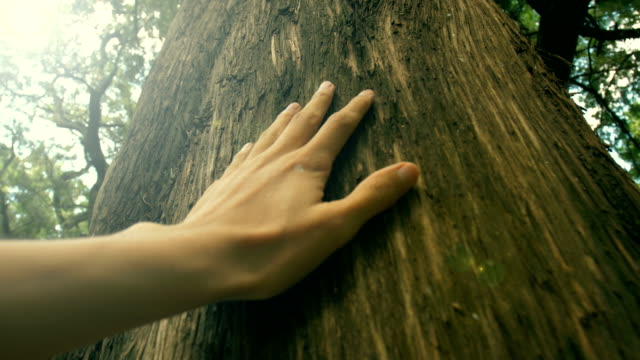 hand touching a tree trunk in the forest - plant bark stock videos and b-roll footage
