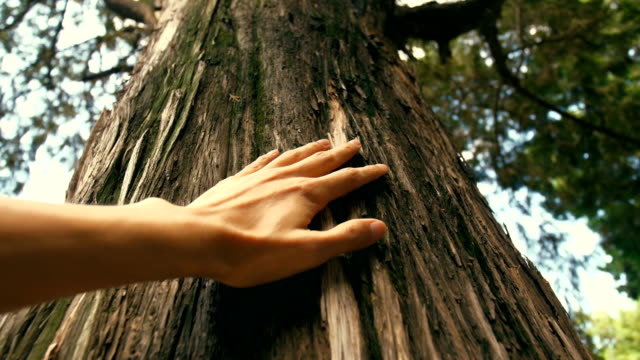 hand touching a tree trunk in the forest - zona arborea video stock e b–roll