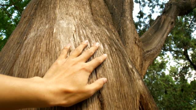 vídeos de stock, filmes e b-roll de mão tocando um tronco de árvore na floresta - acariciar