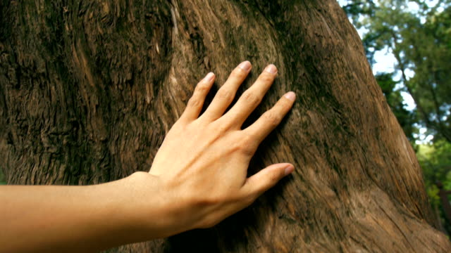 vídeos de stock e filmes b-roll de hand touching a tree trunk in the forest - arvore