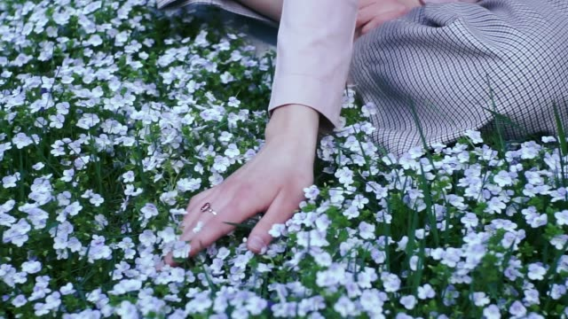 hand touching forget-me-not flowers - ワスレナグサ点の映像素材/bロール