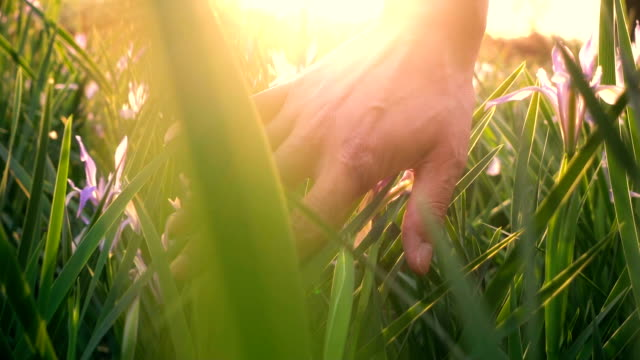 Hand touching grass with sunlight