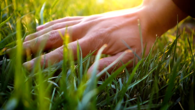 Hand touching grass,feeling nature