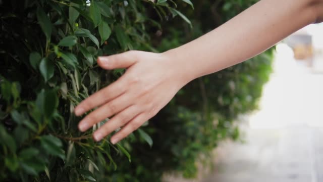 hand touching green leafs, slow motion. - toccare video stock e b–roll