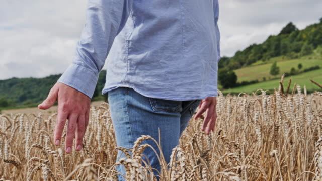 SLO MO. Hand touching wheat, man walking through field. 1. TS CU