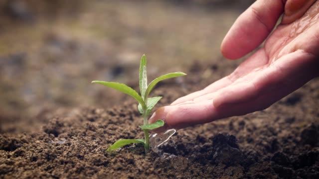hand watering a young plant - piantina di semenzaio video stock e b–roll