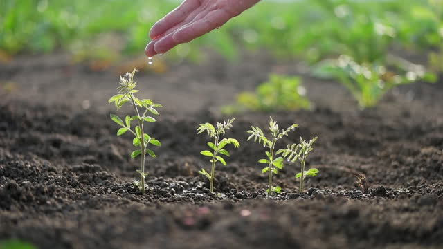 hand watering a young plant - seedling stock videos & royalty-free footage
