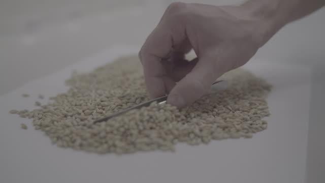 vidéos et rushes de main avec pinces sépare le grain sur tableau blanc - pince chirurgicale