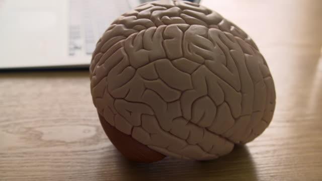 handheld cu of a model brain on a desk - human internal organ stock videos & royalty-free footage