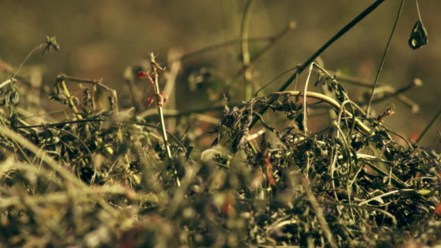 handheld close-up shot of hay - プロボ点の映像素材/bロール