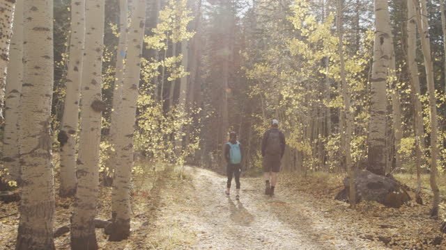 handheld follow shot of male and female hiking together outdoors in the grand mesa national forest near grand junction colorado in the beautiful september fall colors - aspen tree stock videos & royalty-free footage