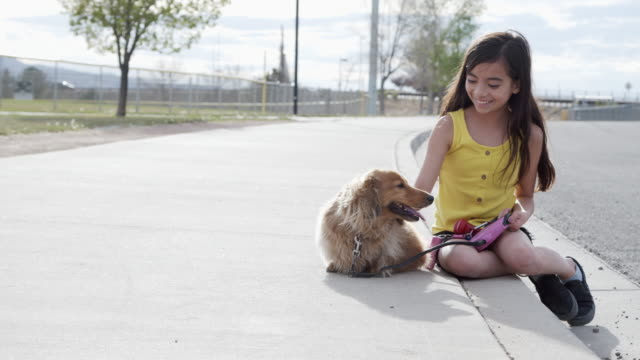 handheld moving shot of a cute 10-11-year-old hispanic, latin, polynesian young child girl playing with her fluffy long haired dachshund family dog on the sidewalk outdoors in the spring - polynesian ethnicity stock videos & royalty-free footage