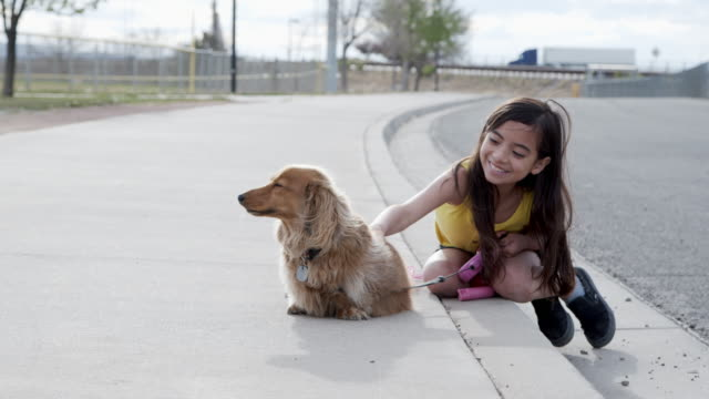 handheld moving shot of a cute 10-11-year-old hispanic, latin, polynesian young child girl playing with her fluffy long haired dachshund family dog on the sidewalk outdoors in the spring - human age stock videos & royalty-free footage