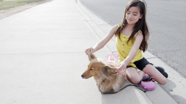 handheld moving shot of a cute, silly 10-11-year-old hispanic, latin, polynesian young child girl playing with her fluffy long haired dachshund family dog's ears on the sidewalk outdoors in the spring - polynesian ethnicity stock videos & royalty-free footage