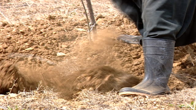 hand-held of druze farmer hoeing soil with mattock, and saying, in arabic, we eat the soil. hand-hoeing is an important part of traditional... - axe stock videos & royalty-free footage