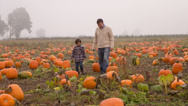 Handheld shot father and son walking in pumpkin farm