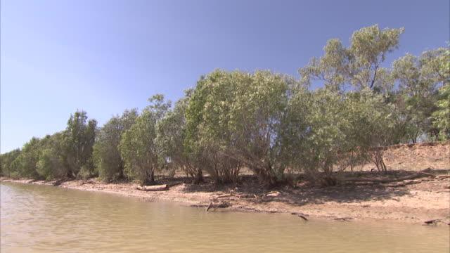 vidéos et rushes de handheld shot from boat of tree-lined river bank in australia - terre en vue