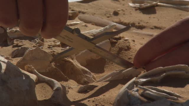 handheld shot of a person measuring bones with a steel caliper - 古代の遺物点の映像素材/bロール