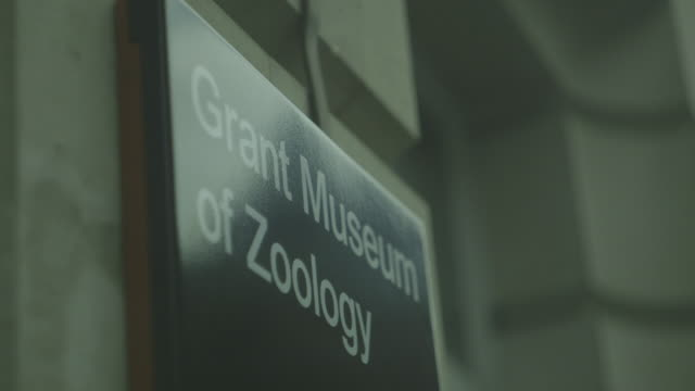 handheld shot of a sign indicating ucl's grant museum of zoology and comparative anatomy, bloomsbury, london, uk. - zoology stock videos & royalty-free footage