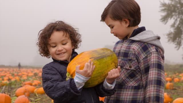 Handheld shot of boy holding pumpkin while standing with brother in farm