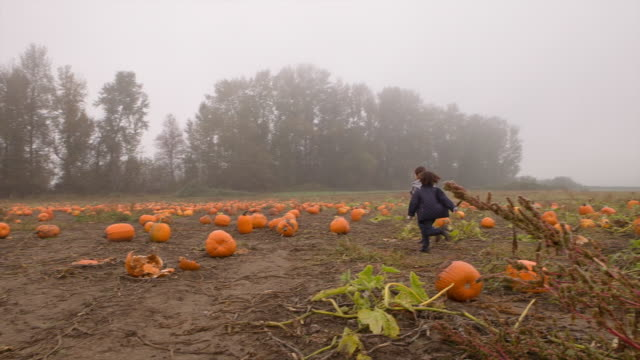 Handheld shot of boys running on field at pumpkin farm during foggy weather