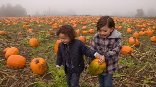 Handheld shot of brothers carrying pumpkins in farm