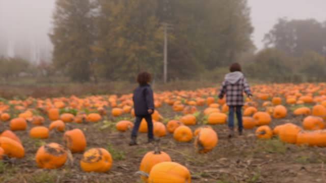 Handheld shot of brothers running in pumpkin farm