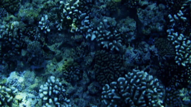 Handheld shot of corals and fish on sea surface