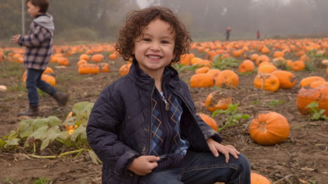 Handheld shot of cute boy sitting on pumpkins