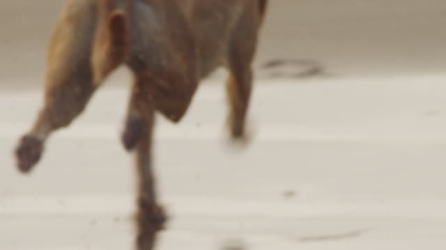 Handheld shot of dog playing with ball at beach