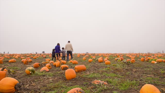 Handheld shot of family walking in pumpkin farm during foggy weather