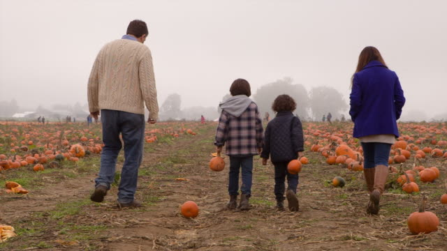 Handheld shot of family walking in pumpkin farm
