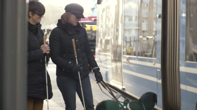 handheld shot of guide dog leading visually impaired women towards bus in city - blind persons cane stock videos & royalty-free footage