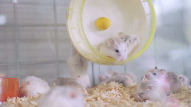 Videos hamster free How to
