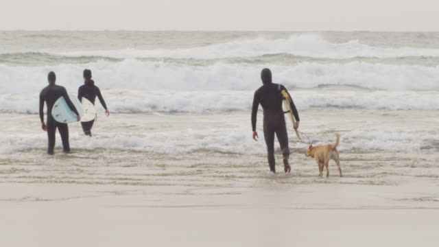 handheld shot of male friends carrying surfboards while walking with dog in sea against sky - oregon stato usa video stock e b–roll