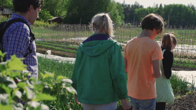 stockvideo's en b-roll-footage met handheld shot of parents and children walking in field during summer - driekwartlengte