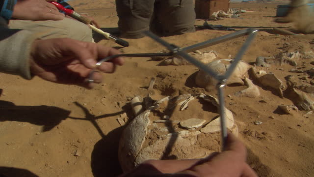 handheld shot of person measuring a skull - archaeologist stock videos & royalty-free footage