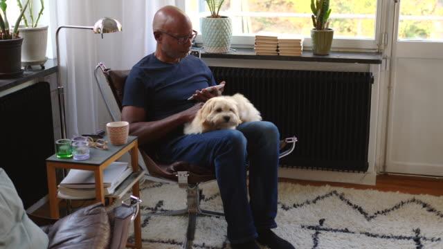 vidéos et rushes de handheld shot of retired senior man reading e-book while stroking dog in room at home - caresser
