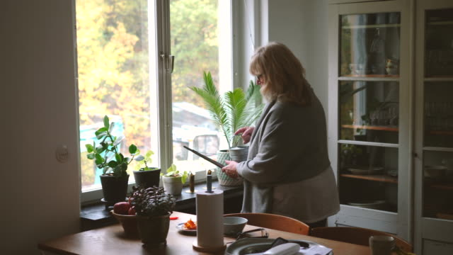 vídeos de stock, filmes e b-roll de handheld shot of retired senior woman watering houseplants on window sill at home - planta de interior