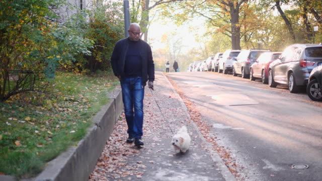 handheld shot of senior man walking with dog on sidewalk during autumn - pavement stock videos & royalty-free footage