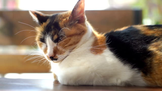 vídeos de stock, filmes e b-roll de tiro portátil de gato dormindo com pessoas que se deslocam no fundo - bichos mimados