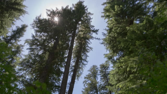 Handheld shot of trees growing against sky at mount hood national forest