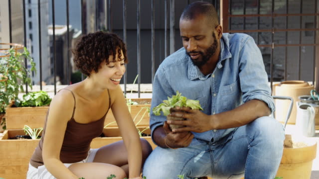 Hand-Held Shot of Urban Gardeners Contemplating Lettuce