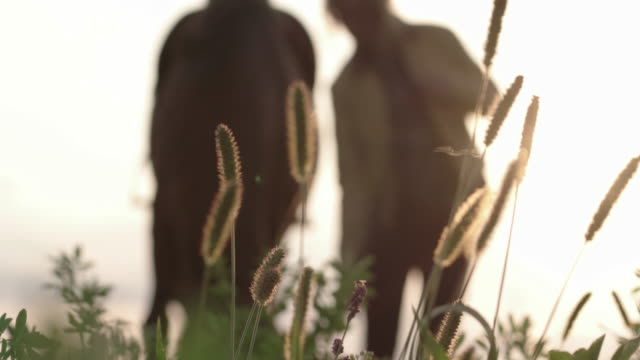 handheld shot of woman standing with horse on field - herbivorous stock videos & royalty-free footage