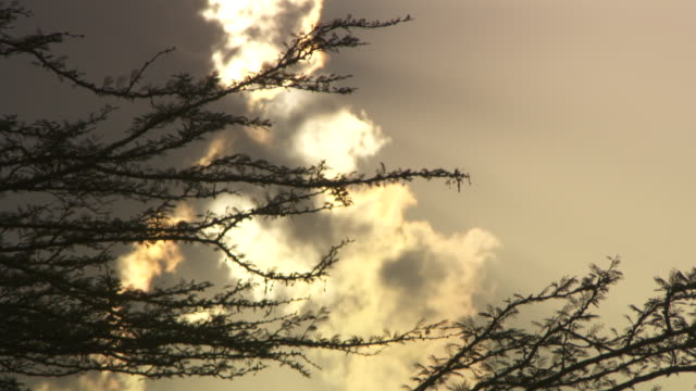 Handheld tilt onto spiky branches swaying gently against an atmospheric sky.